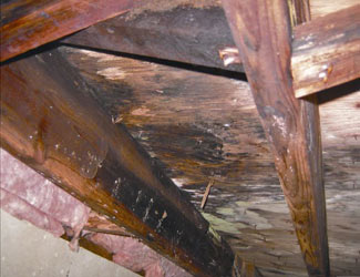 mold and rot in a Wasilla crawl space