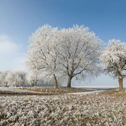 Frost covering trees and a grassy field in Pelican